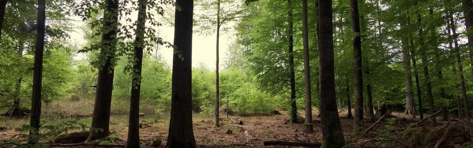 Baumfällung Baumpflege Aschaffenburg Baumdienst Gerber